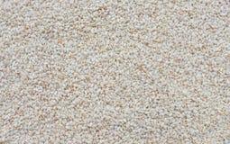 Sezamowy biel Zdjęcia Stock
