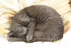 Sezar ist eine reizende Katze Lizenzfreie Stockfotografie