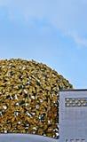 Sezession Wien Στοκ Φωτογραφίες