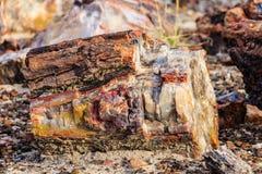 Sezione brillantemente colorata di legno petrificato, foresta nazionale petrificata Immagini Stock
