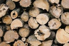 Sezione del taglio degli alberi Fotografia Stock