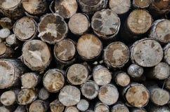 Sezione del taglio degli alberi per struttura del fondo Fotografia Stock