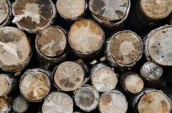 Sezione del taglio degli alberi per struttura del fondo Fotografie Stock