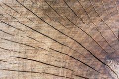 Sezione del tronco Immagini Stock