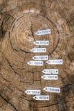 Sezione del tronco di albero secolare con le etichette di anno fotografia stock libera da diritti
