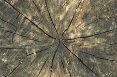 Sezione dell'albero fotografia stock
