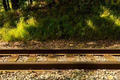 Sezione della ferrovia della foresta Immagini Stock Libere da Diritti