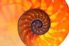 Sezione delle coperture del Nautilus Fotografie Stock Libere da Diritti