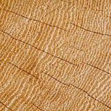 Sezione di legno di struttura del fondo degli anelli di crescita incrinati del legno duro Fotografie Stock