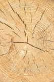 Sezione di legno incrinata invecchiata dell'albero con gli anelli e la struttura immagini stock