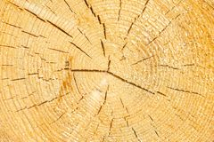 Sezione di legno incrinata invecchiata dell'albero con gli anelli e la struttura immagine stock