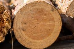 Sezione trasversale astratta di grande pino tagliato immagine stock