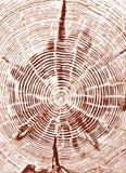 Sezione trasversale del ceppo di albero Immagini Stock Libere da Diritti