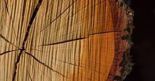 Sezione trasversale del circuito di collegamento di albero Fotografie Stock Libere da Diritti