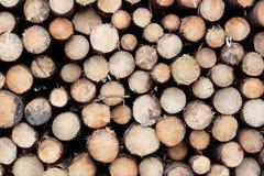 Sezione trasversale del fondo dei tronchi di albero Decorazione dell'albero di taglio Tagliando i tronchi di albero disposti insi fotografia stock libera da diritti