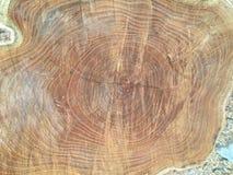 Sezione trasversale del fondo di struttura di legno dell'albero fotografia stock libera da diritti