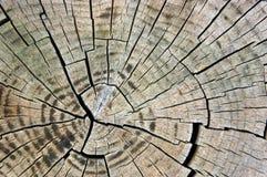 Sezione trasversale del legname Fotografia Stock Libera da Diritti