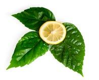 Sezione trasversale del limone giallo Fotografia Stock