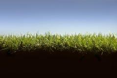 Sezione trasversale del prato inglese dell'erba Fotografie Stock Libere da Diritti