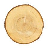 Sezione trasversale del tronco di albero Immagini Stock Libere da Diritti