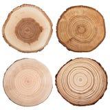 Sezione trasversale del tronco di albero isolata su bianco fotografia stock libera da diritti