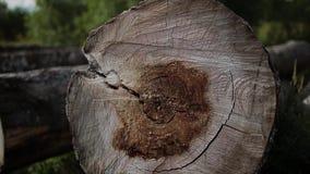 Sezione trasversale del tronco di albero isolata su bianco archivi video