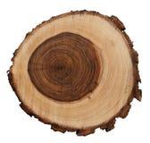 Sezione trasversale del tronco di albero del salice piangente isolato su fondo bianco Immagine Stock