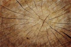 Sezione trasversale dell'albero di Grunge fotografie stock