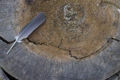 Sezione trasversale dell'albero e della piuma fotografia stock
