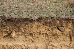 Sezione trasversale dell'argilla della terra Fotografia Stock