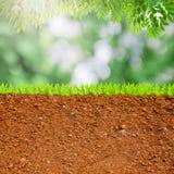 Sezione trasversale di erba e di suolo Fotografie Stock Libere da Diritti
