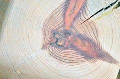 Sezione trasversale di legno Fotografie Stock