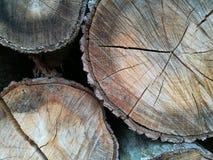 Sezione trasversale di legno Fotografia Stock