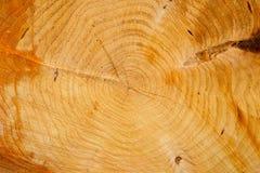 Sezione trasversale di legno, primo piano fotografia stock
