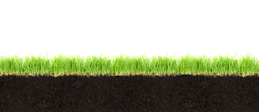 Sezione trasversale di suolo e di erba immagini stock