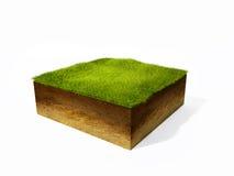 Sezione trasversale di terra con erba Fotografia Stock Libera da Diritti