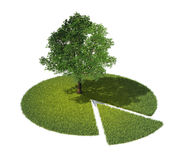 Sezione trasversale di terra con erba e l'albero Fotografia Stock Libera da Diritti