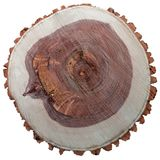 Sezione trasversale di un albero immagine stock