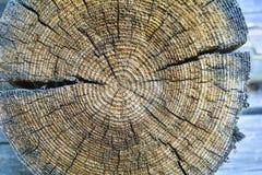 Sezione trasversale di vecchio tronco di albero, mostrando gli anelli annuali e le crepe Struttura di legno fotografie stock libere da diritti