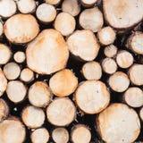 Sezioni di legname con i grandi e piccoli alberi immagine stock