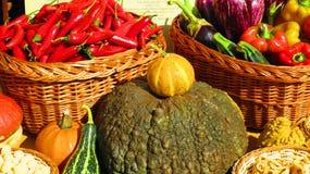 Sezonów warzywa obraz stock