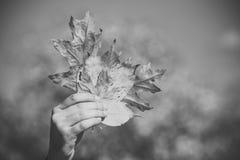 Sezon i jesień ręka z naturalnego żółtego spadku liścia pogodny plenerowym jesień liści bukiet w męskiej ręce fotografia stock