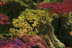 Sezon jesienny w Japan przy Rurikoin Fotografia Stock