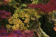 Sezon jesienny w Japan przy Rurikoin Zdjęcie Royalty Free