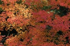 Sezon jesienny w Japan przy Rurikoin Obraz Royalty Free