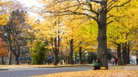 Sezon jesienny w jesień hokkaida uniwersytecie Zdjęcie Stock