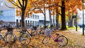 Sezon jesienny w jesień hokkaida uniwersytecie Zdjęcia Royalty Free