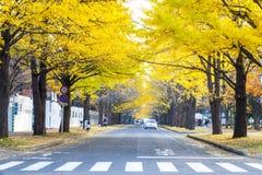 Sezon jesienny w jesień hokkaida uniwersytecie Zdjęcia Stock