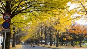 Sezon jesienny w jesień hokkaida uniwersytecie Obraz Royalty Free