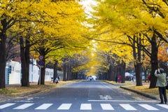 Sezon jesienny w jesień hokkaida uniwersytecie Obrazy Royalty Free